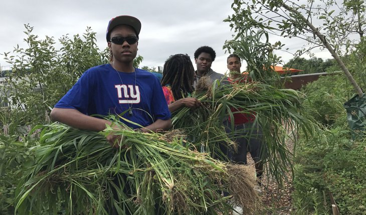 Students in the 2017 Summer Youth Employment Program work on community garden